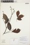 Paullinia capreolata (Aubl.) Radlk., GUYANA, H. D. Clarke 10153, F