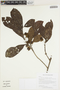 Sloanea L., GUYANA, T. McDowell 4449, F