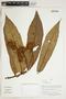Herbarium Sheet V0415157F
