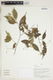 Herbarium Sheet V0415144F