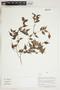 Herbarium Sheet V0415138F