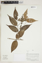 Herbarium Sheet V0415156F