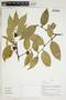 Herbarium Sheet V0415179F