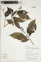 Herbarium Sheet V0415249F