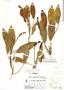 Potamogeton ferrugineus image