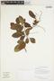 Paullinia isoptera Radlk., GUYANA, H. D. Clarke 7500, F