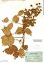 Rubus bogotensis image