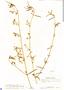 Aeschynomene americana var. glandulosa (Poir. & Lam.) Rudd, Panama, D. R. Harvey 5197, F