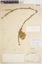 Gurania rhizantha (Poepp. & Endl.) C. Jeffrey, COLOMBIA, R. E. Schultes 8307, F