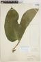 Gurania rhizantha (Poepp. & Endl.) C. Jeffrey, PERU, G. Klug 157, F