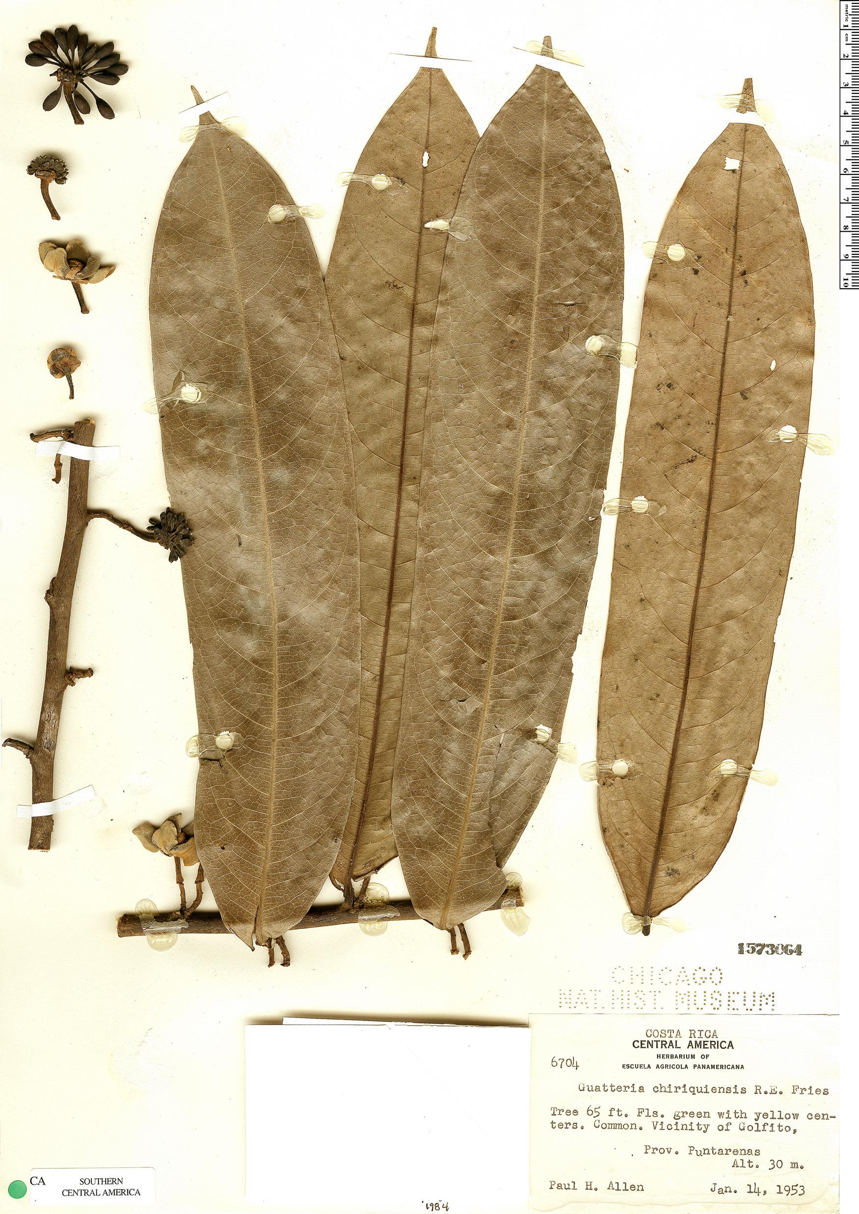 Espécime: Guatteria chiriquiensis