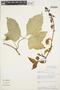 Psiguria ternata (M. Roem.) C. Jeffrey, PERU, R. B. Foster 9629, F