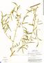 Aeschynomene americana var. glandulosa (Poir. & Lam.) Rudd, Costa Rica, W. C. Burger 6524B, F