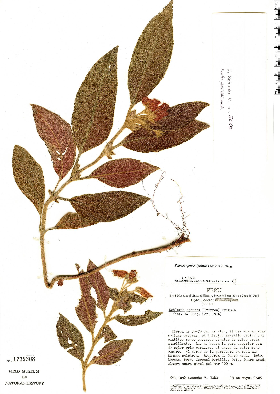 Specimen: Pearcea sprucei