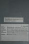 2018 Konecny Paleobotany specimen label number - K11-1956 Taeniophyllum latifolium