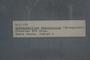 2018 Konecny Paleobotany specimen label number - K12-193 Sphenophyllum emarginatum