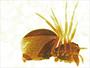 Pelecopsis bishopi female habitus