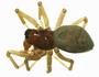 Erigone capra female habitus