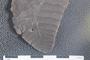 2018 Konecny Paleobotany fossil specimen