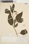 Solanum polytrichostylum Bitter, PERU, J. J. Soukup 3618, F