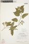 Solanum cochabambense Bitter, PERU, E. Franquemont 1440, F