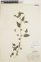 Solanum americanum Mill., PERU, E. P. Killip 25218, F