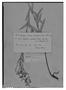 Field Museum photo negatives collection; Genève specimen of Salvia aridicola Briq., PARAGUAY, E. Hassler 5227, Type [status unknown], G