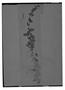 Field Museum photo negatives collection; Genève specimen of Salvia leucocloda Benth., PERU, A. Mathews 464, Isotype, G