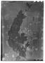 Field Museum photo negatives collection; Genève specimen of Salvia nitidula Briq., BRAZIL, A. Isabelle, Type [status unknown], G