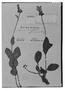 Field Museum photo negatives collection; Genève specimen of Salvia ovalifolia var. villosa Benth., BRAZIL, F. Sellow, Type [status unknown], G