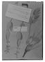 Field Museum photo negatives collection; Genève specimen of Salvia paraguariensis Briq., PARAGUAY, E. Hassler 9237, Type [status unknown], G