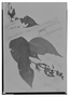 Field Museum photo negatives collection; Genève specimen of Salvia recurva Benth., MEXICO, C. Jürgensen 676, Isotype, G