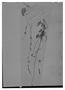 Field Museum photo negatives collection; Genève specimen of Salvia striata Benth., PERU, A. Mathews, Type [status unknown], G