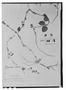 Dicliptera tomentosa image