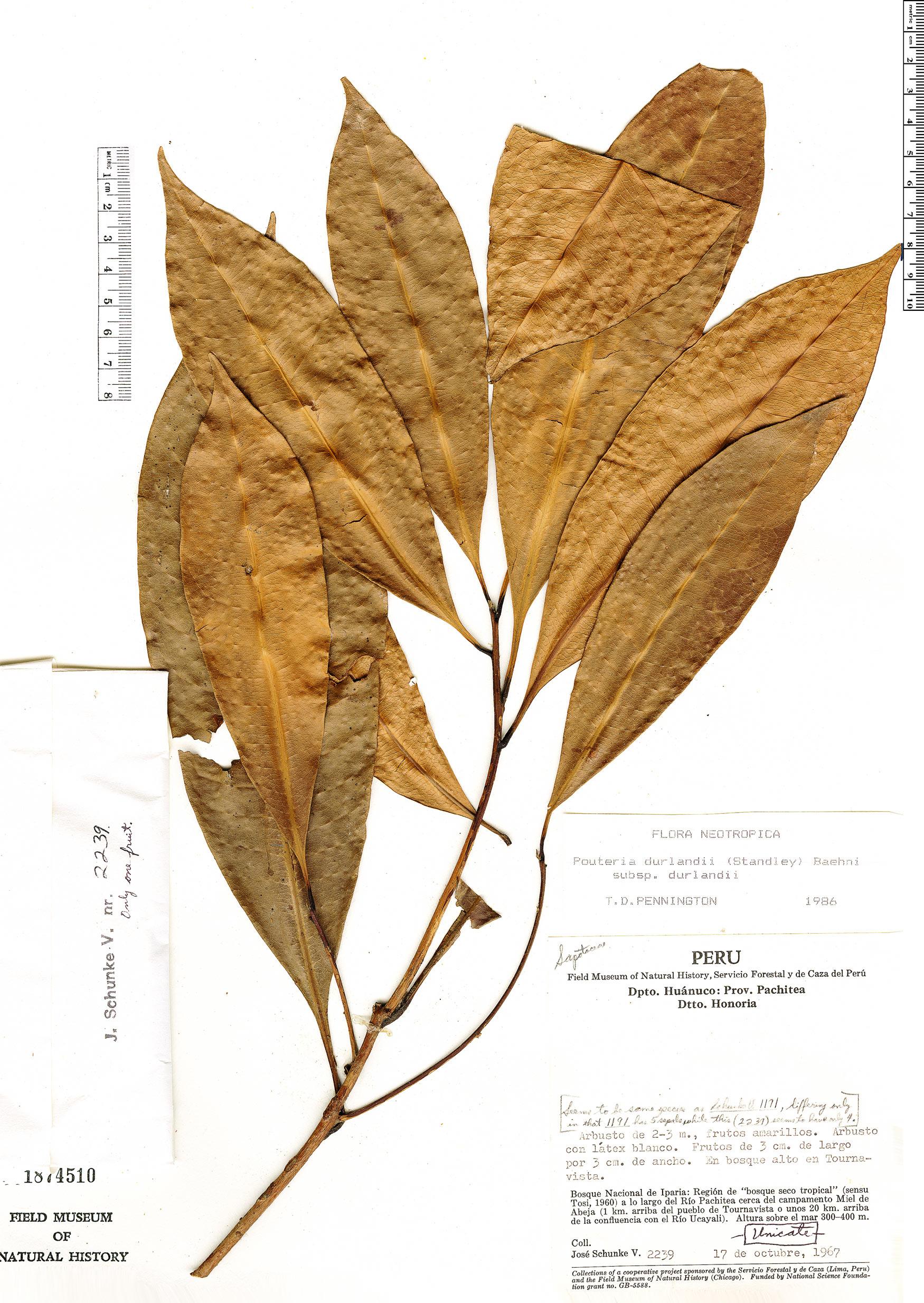 Specimen: Pouteria durlandii