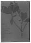Field Museum photo negatives collection; Madrid specimen of  Clethra obovata (Ruíz & Pav.) G. Don, PERU, H. Ruíz L. 14/53, Type [status unknown], MA