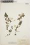 Peperomia pellucida (L.) Kunth, GUYANA, J. S. de la Cruz 2070, F