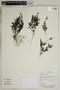 Herbarium SheetV0323673F