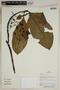 Herbarium SheetV0323735F