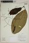 Herbarium SheetV0323736F