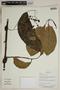 Herbarium SheetV0323737F