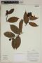 Herbarium SheetV0323774F