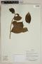 Herbarium SheetV0323802F