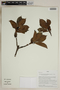 Herbarium SheetV0323851F