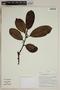 Herbarium SheetV0323852F