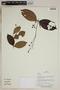 Herbarium SheetV0323856F