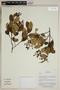 Herbarium SheetV0323858F