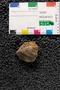 2018 Summer IMLS Ordovician Digitization Project. Arthropod fossil