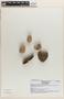 Tontelea micrantha (Mart.) A. C. Sm., Brazil, J. A. Lombardi 6584, F