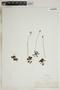 Drosera rotundifolia L., U.S.A., J. T. Stewart, F